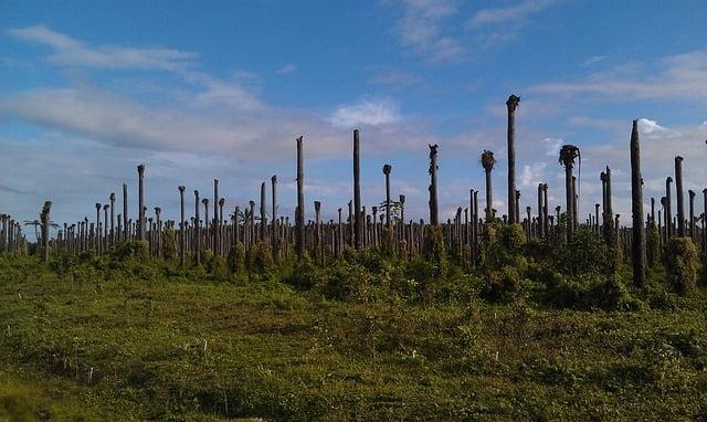 Co olej palmowy ma wspólnego ze świadomym życiem? Czym jest świadome życie?